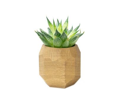 geometric planter oak oakywood 1