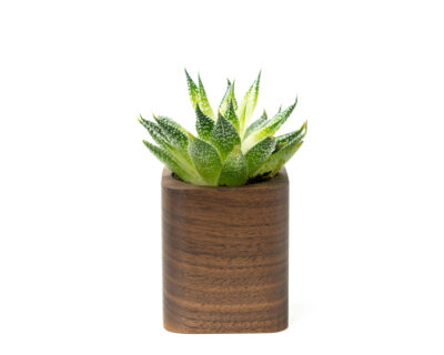 square planter walnut oakywood 01