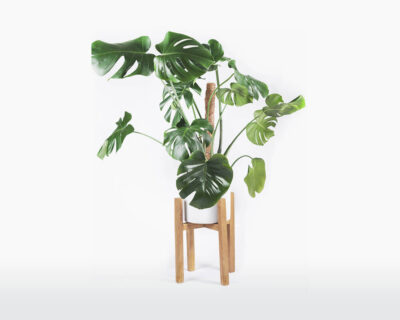 plant stand oak oakywood with beautiful plant on webshop wooden amsterdam.jpg