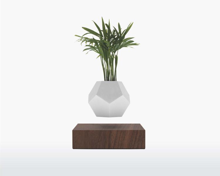 lyfe flyte levitating plant walnut base scaled 1.jpg